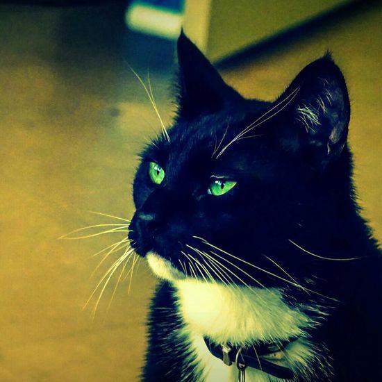 Cats Pets Pet Photography  A6000 Cat