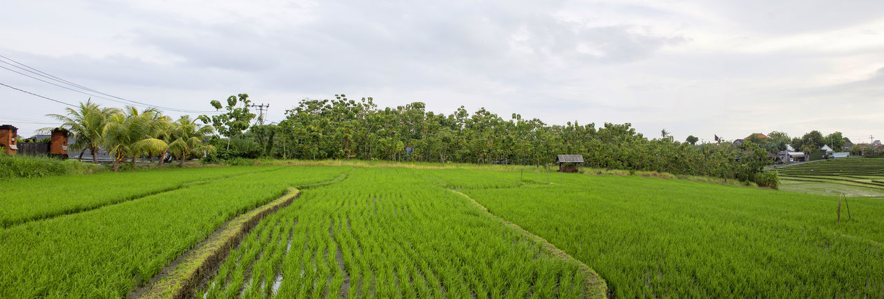 Agriculture Beauty In Nature Day Green Color Growth Landscape Nature No People Outdoors Sky