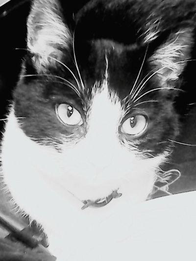 Good night. Yera Cute Pets