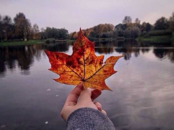 Autumn Change Leaf Maple Leaf Maple Reflection Lake Outdoors Water Nature Dry Tree Real People Day Focus On Foreground Close-up Standing Water Fallen Leisure Activity EyeEmNewHere Beauty In Nature Red Yellow Russia Sankt-Petersburg The Great Outdoors - 2017 EyeEm Awards Perspectives On Nature