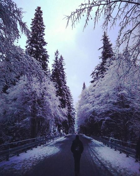 """caminante, no hay camino, se hace camino al andar"" Zakopane Morskieoko Tatras Poland"
