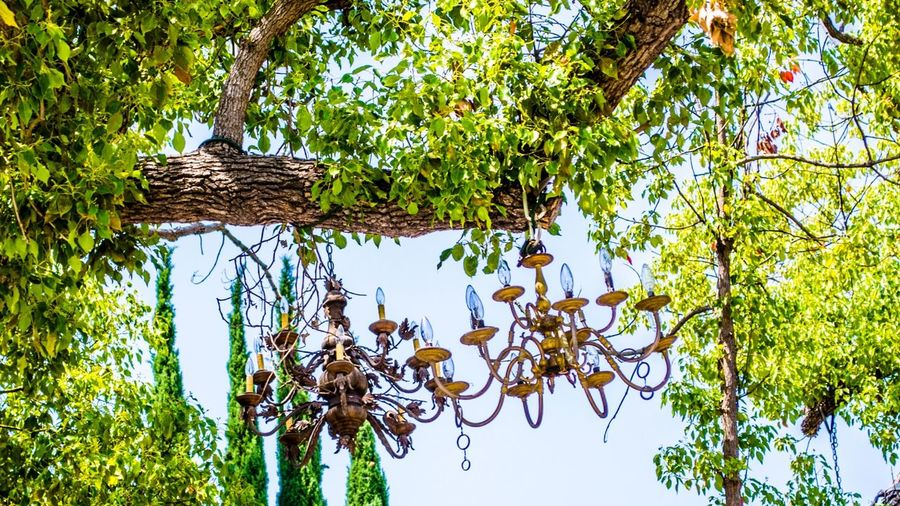 Chandeliers on a Tree in Los Angeles - From our tour California Chandeliers City Friendlylocalguides Green Lake Landscape Losangeles Silver  Travel Tree USA Visit Wanderlust