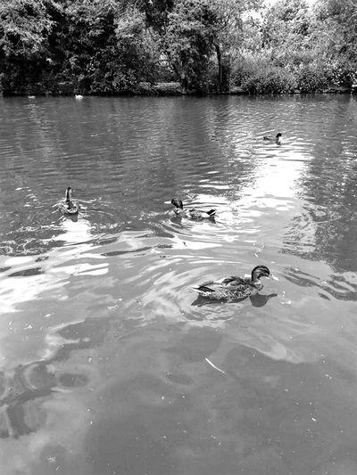 Bird Tree Water