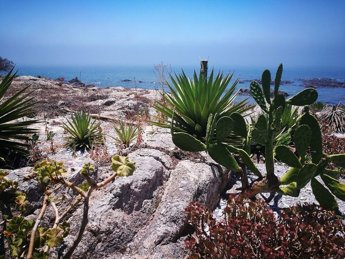EyeEmNewHere EyeEmReady Nature Plant Sea Cactus Horizon Over Water Outdoors