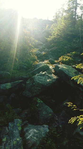 On the way to the top. Syniachka mountain. Ukraine 💙💛 Carpathians Beauty In Nature Sulikopics Mountains Carpathian Mountains Trekking Nature Love Sunlight Mountain Feeling Good Trekking Hiking Ilovemountains