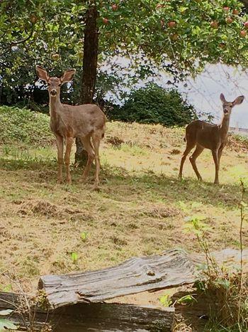 Animal Deer Moments Wildlife & Nature Sweet♡ Deer Babies
