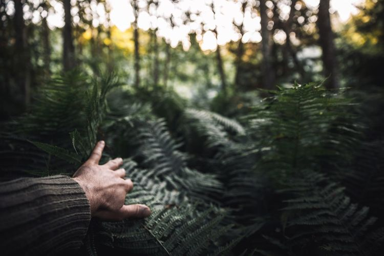 Cropped hand touching plants in forest