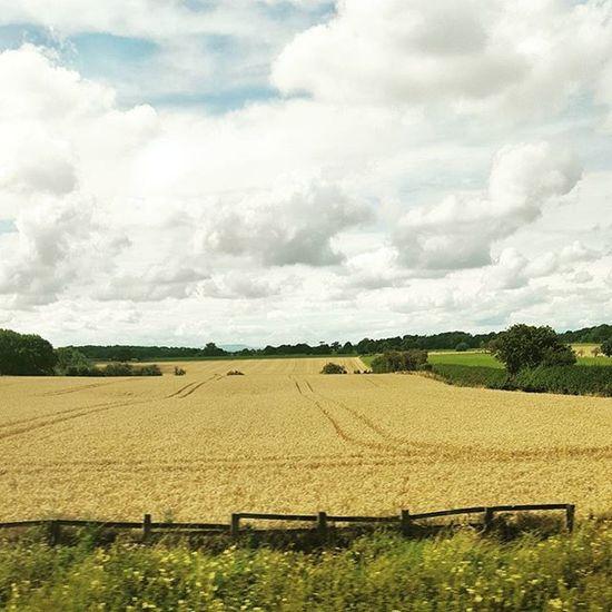 Oh England, you so pretty Englishcountryside Summer Cornfield Bluesky clouds trainjourney harvest thenorth