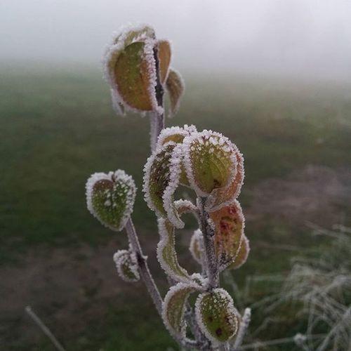 Winter is comming Winter Plant Plants Ice Fog Eis Nebel Pflanze  Pfalz Zweibrücken Zweibrückenthestyleoutlets Multimediainternetpark