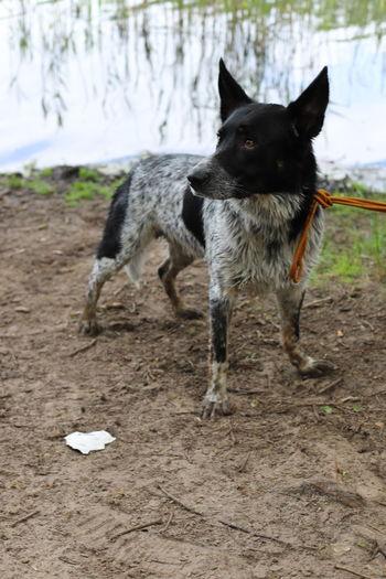 Black dog running on land