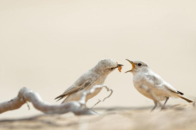 Close-up of birds perching on a bird