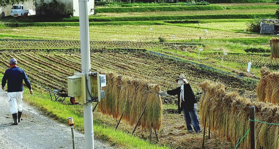 Outdoors Working Scarecrow Rrrrr Ricefields Occupation Farmers Life Japan Photography Rice Harvest Rice Harvest Nature