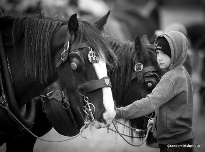 A boy keeps a close on his father's horse at this year's Ploughing Championships 2014 Black And White Mono Chrome Ireland