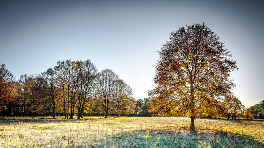 Autumn tress Tree Plant Sky Landscape Land Grass Tranquility Autumn Nature Tranquil Scene Environment No People Scenics - Nature Day Beauty In Nature Non-urban Scene Rural Scene Clear Sky Outdoors Taubertal Tauber Valley Tauberbischofsheim