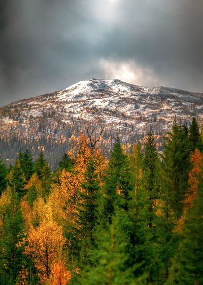 Snow covered mountain with autumn foliage foreground Fujifilm EyeEm Selects Autumn Collection Orange Color Golden Leaves_collection Treescollection Autumn Leafs Tree Astronomy Mountain Snow Forest Pinaceae Mountain Peak Sky Landscape Pine Woodland Mountain Range Mountain Ridge Yukon Valley Spruce Tree Fir Tree Coniferous Tree Rock Formation Natural Landmark Rocky Mountains Snowcapped Mountain Evergreen Tree