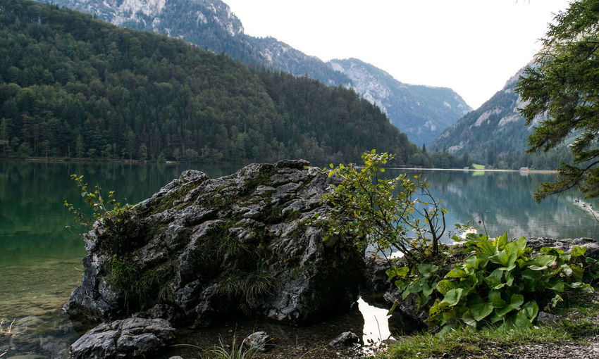 View of calm lake in forest