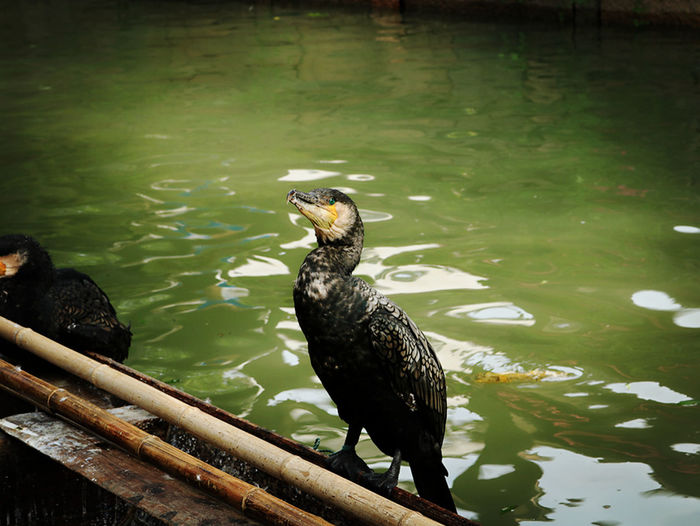 A Bird's Eye View A Bird Eye View Standing Standing Water On The Ship Looking Looking At Camera Animal Themes Bird Nature Animal Behavior Riverside See See What I See Cute Cute Bird Friend Human's Best Friend New Life Waiting