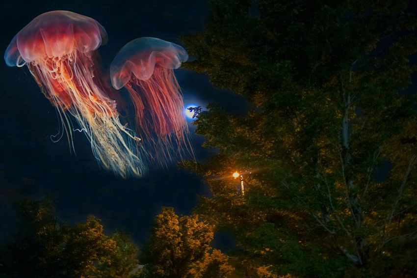 """""""The silent autumnal migration of the fabled moon jelly across the pre-dawn sky"""" (2017) Moonlight Through The Trees Jellyfish NightNo People Outdoors Sky Luminosity Nature Imaginary Landscapes Creature From The Deep Outdoor Photography Nature Unknown Species Imaginary Imaginary World Trees Ethereal Multi Colored In Motion"""