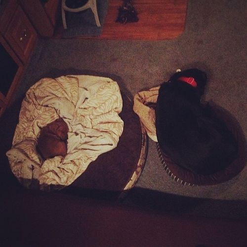 Umm.. Something's not right here..? Obitokhhisbed Spoiledpuppy Poorvader WTH lab dachshund