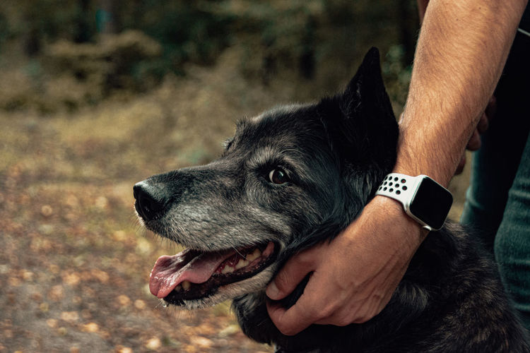 Close-up of man with dog