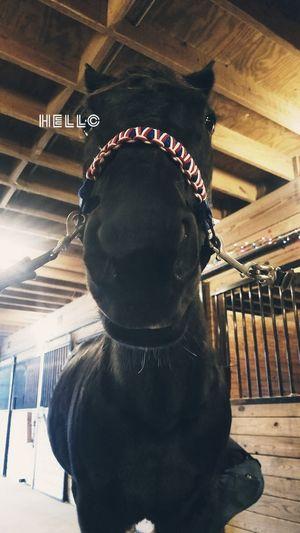 hello Stablemate Barnlife Barn MyOnlyFriend Mybestfriend Indoorarena BlackBeauty Pets MyHorse Horse