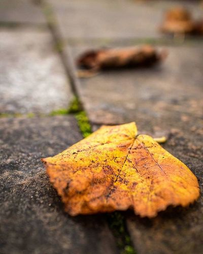 Rustic Beauty Rustic Textures Throwback Yellow Autumncolors Autumn Leaf Autumnleaves Detail Macro Composition Lines Visitangus Brechin Angus Scotland Pavement