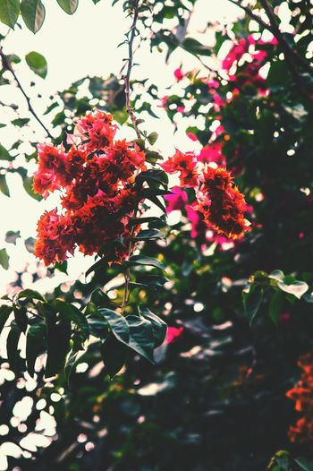 Low angle view of red flowers on tree