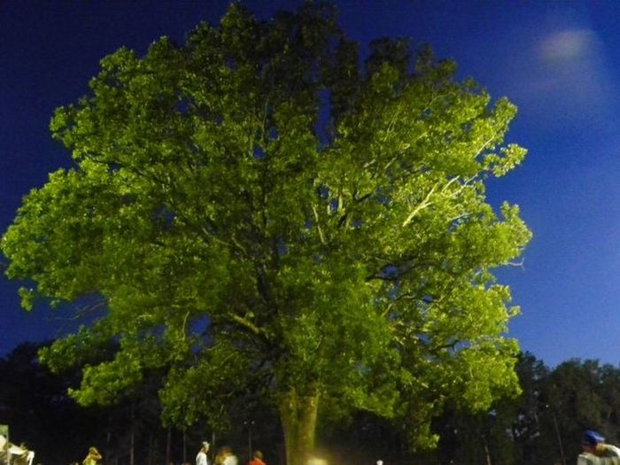 tree from stn mtn at afest 2009 Check This Out