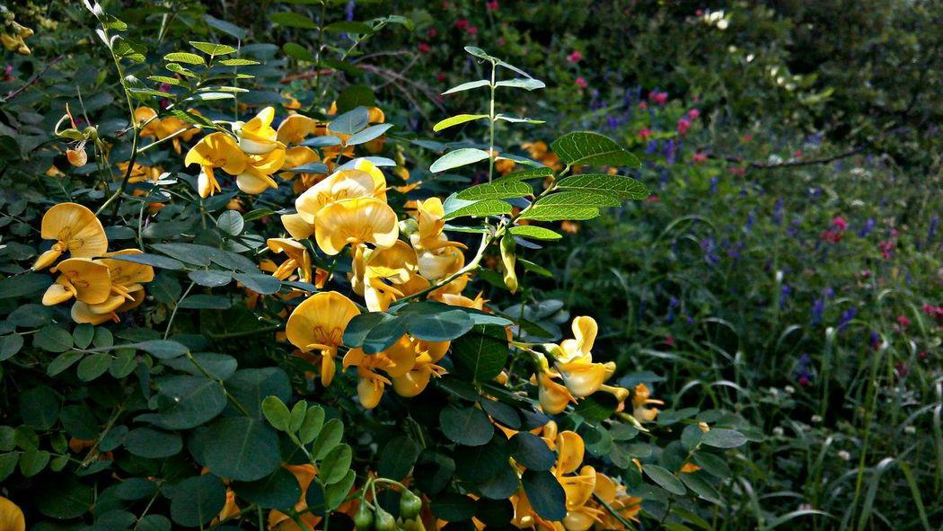 Munzurnationalpark Dersim Ovacık Flowers Nature Green Yellow Flower