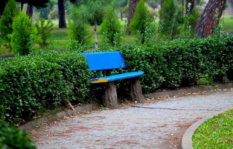 Empty benches on footpath in park