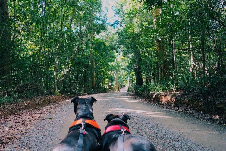 Dog Dog Dogs
