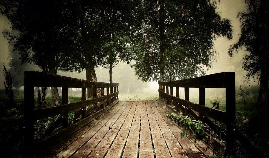 A foggy summer