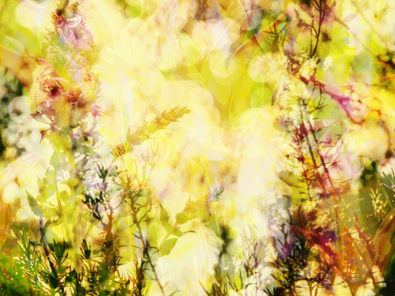 Abstract Blooming Blossom Botany Double Exposure Flower Freshness Leaf Springtime