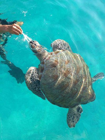 Turtle in Redang Island Malaysianisland