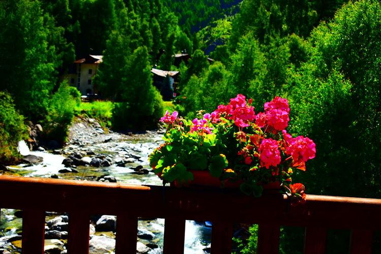 Flowering plants by railing in garden