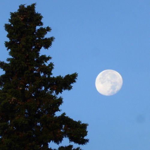 La Luna y el ciprés. Skylovers Lunalunera Moon Tree Zaragoza
