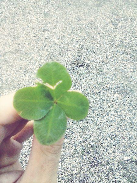 Hand Four Leaf Clover Stones FOLLOE ME-I Follow Back Park Taking Photos Sun Yep The Life Is Beautiful