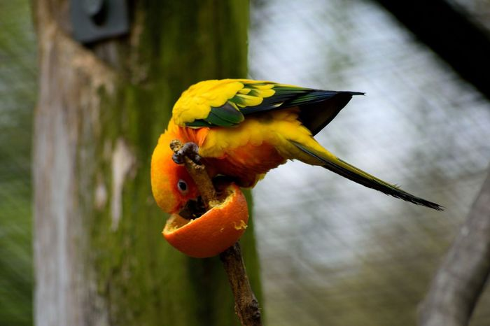 Alwetterzoo Münster Bird Animal Themes Animal Wildlife No People Nature Parrot Beauty In Nature Day Outdoors Gernany German Single Boy First Eyeem Photo