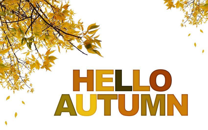 Textured  Word Day Hello Autumn Tree White Background