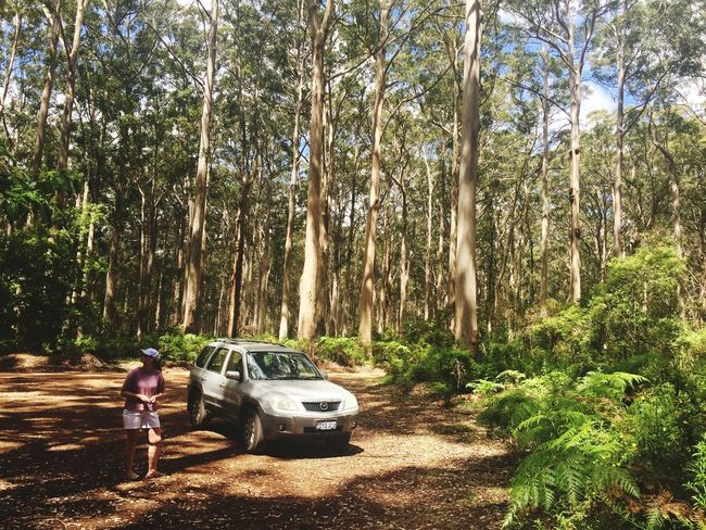 Boyanup Forest Tree Real People Transportation Car Land Vehicle Growth Nature Forest Adventure