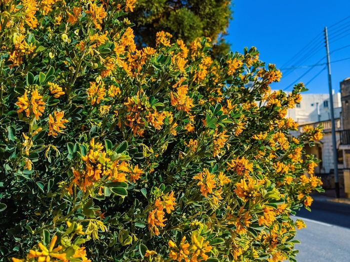 Yellow flowering plants against orange sky