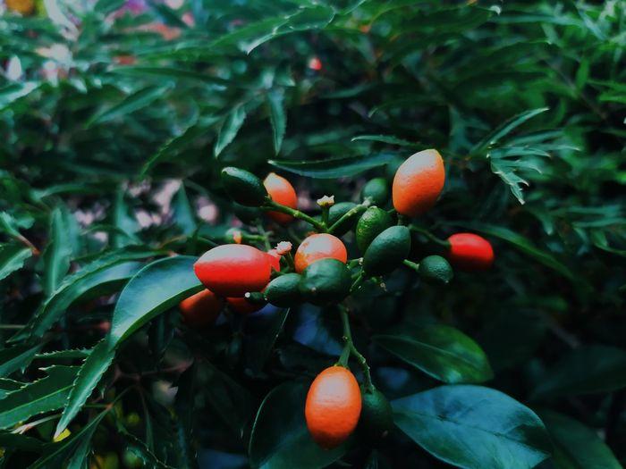 Fruit of summer.