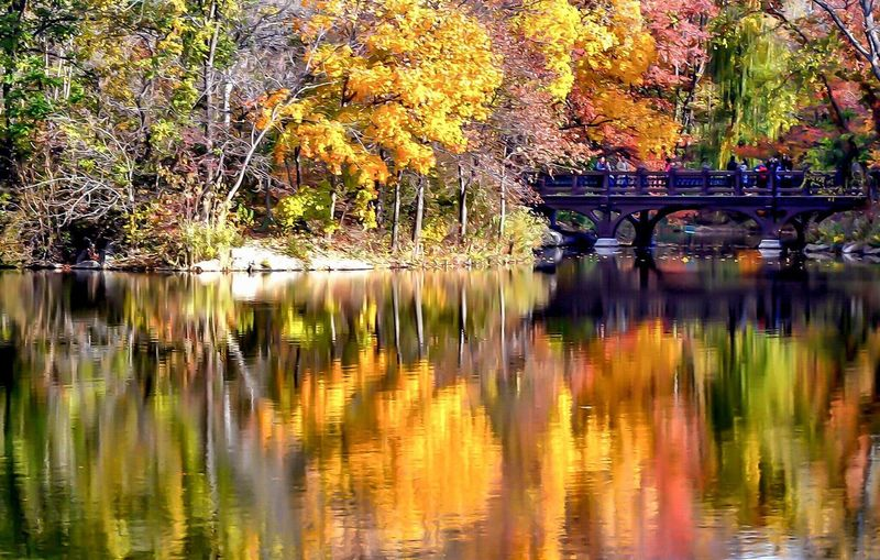 Autumn Reflection Tree Change Lake Leaf Nature Water Beauty In Nature Tranquil Scene Outdoors Scenics Lost In The Landscape Foot Bridge Central Park Manhattan Urban Oasis Growth Day No People Architecture