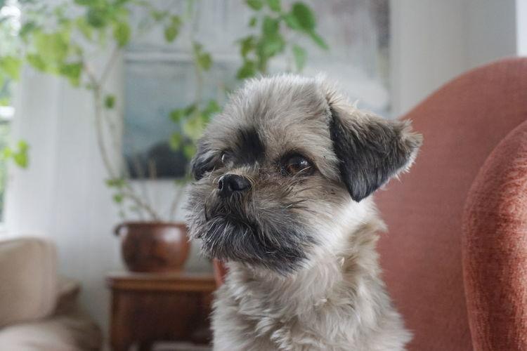 dog portrait Cute Dog  EyeEm Selects Pets Portrait Ear Dog Puppy Beauty Young Animal Cute Animal Hair Sitting Mixed-breed Dog