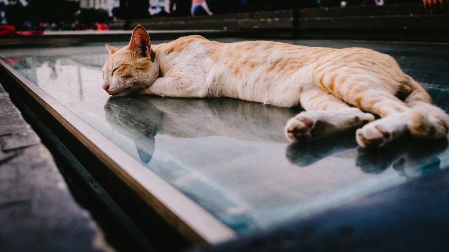 Cat sleeping in a dog
