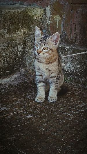 as curious as a cat!! Cat Photography Is My Escape From Reality! Curious Cat Animal Themes Eyeem Photo No People Wondering Cute Cats Cute