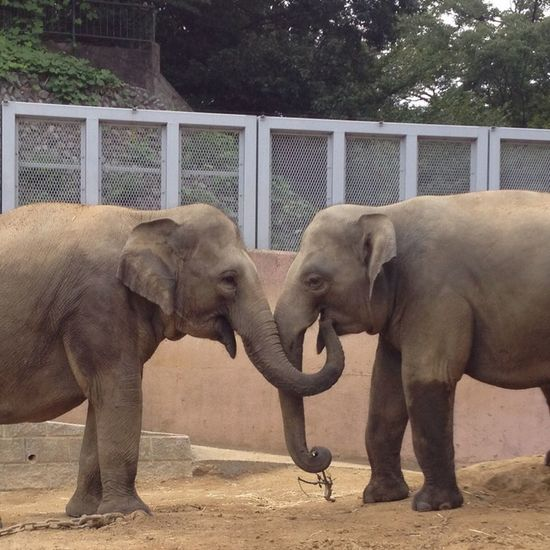 Animals Zoo Relaxing Love