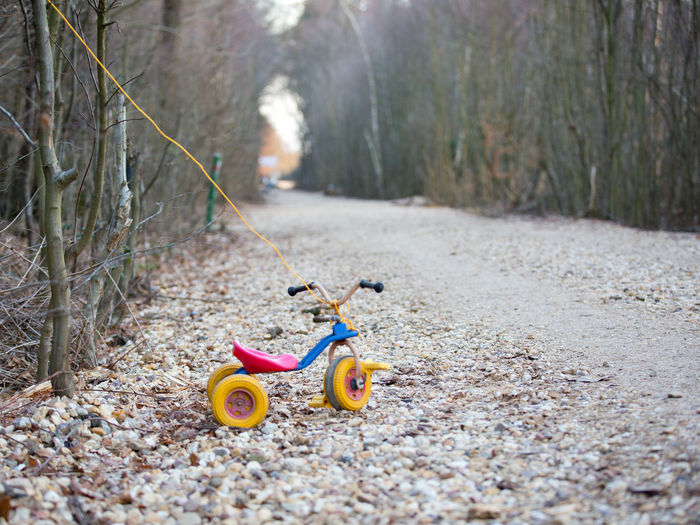 Toy Transportation Day Land Nature Childhood Tree Plant Representation Mode Of Transportation Outdoors Focus On Foreground Toy Car Absence Selective Focus Direction Tricycle The Way Forward Wheel Rope Tethered No People Gravel Path Forest