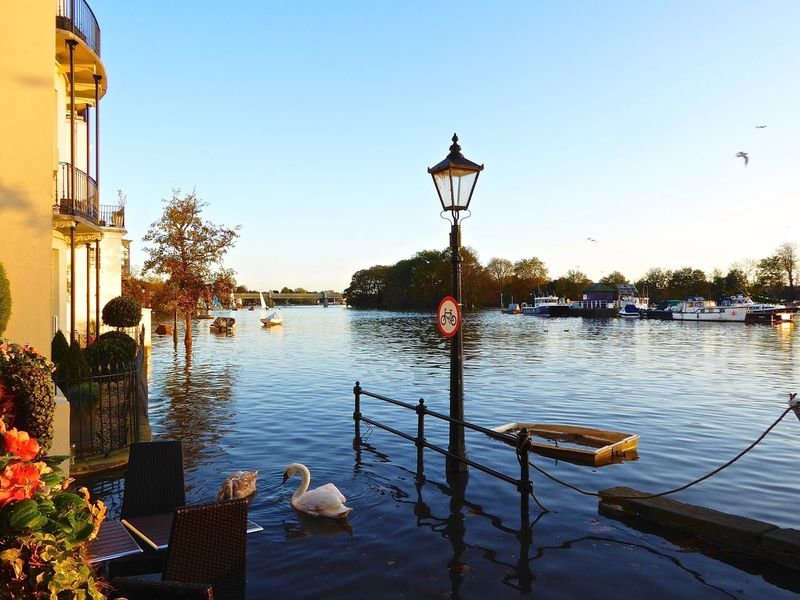 River Thames Thames Flooded Flooded Streets Flooded Road Flooded River High Tide ChiswickRiverside Blue Swans Boats