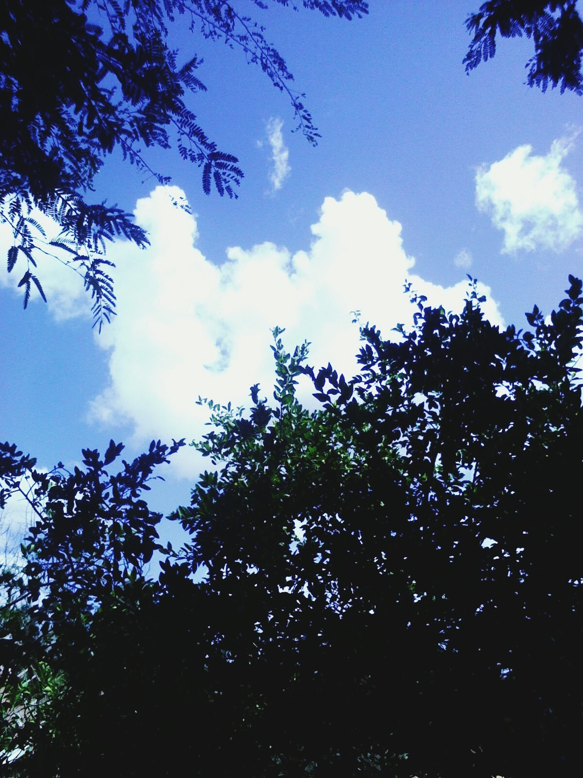 tree, low angle view, sky, branch, growth, beauty in nature, nature, tranquility, silhouette, cloud - sky, blue, cloud, scenics, tranquil scene, outdoors, no people, high section, day, treetop, idyllic